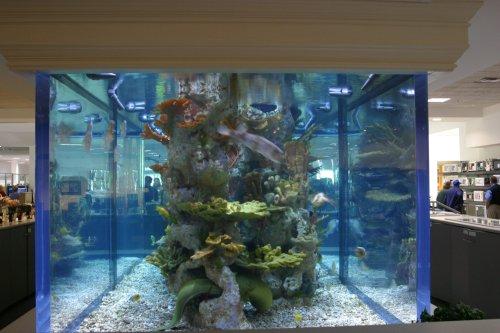 ... water features public aquarium project shedd aquarium chicago il