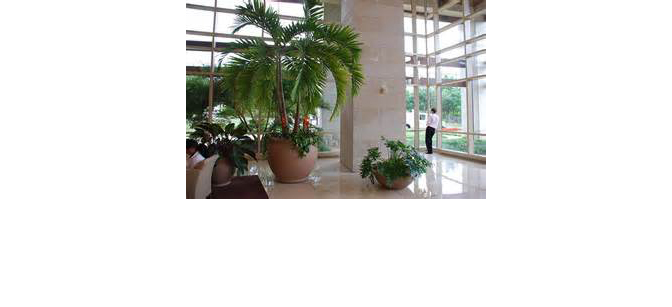Interior Landscaping Of Houston Video Image Gallery Proview