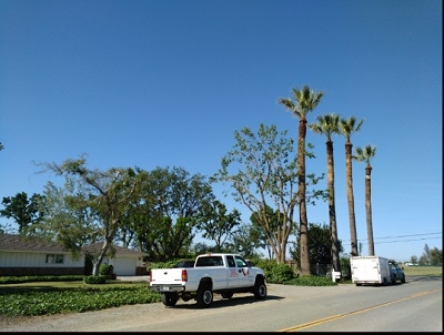Work we have done - California All Star Tree Services