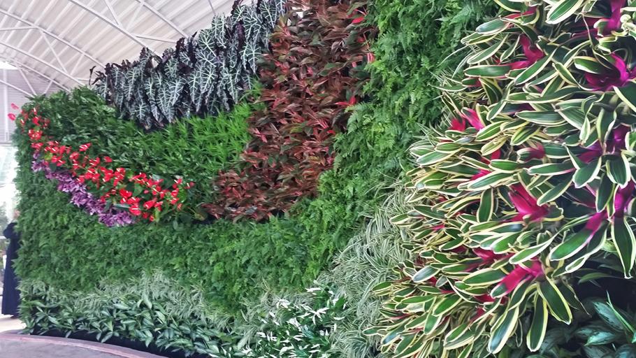 Plants On Walls Norcross Georgia Proview