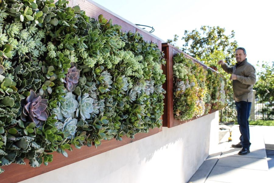 ... Succulent Walls   Exterior Design   TrueVert   Vertical Garden Solutions  ...