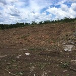 Services - Blanchflower Logging and Land Clearing