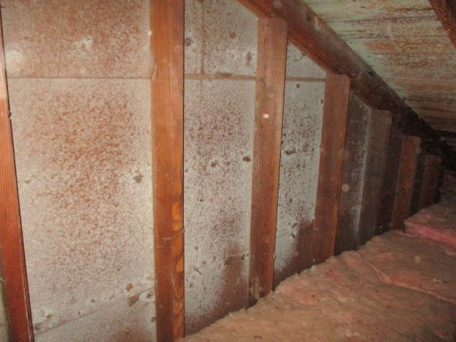 Mold Testing & Remediation