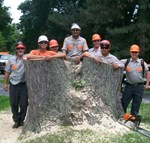 Tree & Stump Removal  - Homer Tree Service, Inc.