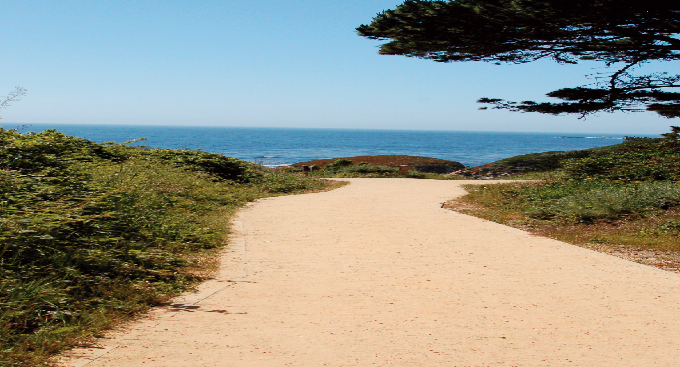 Path Fines for Walkways - California Gold