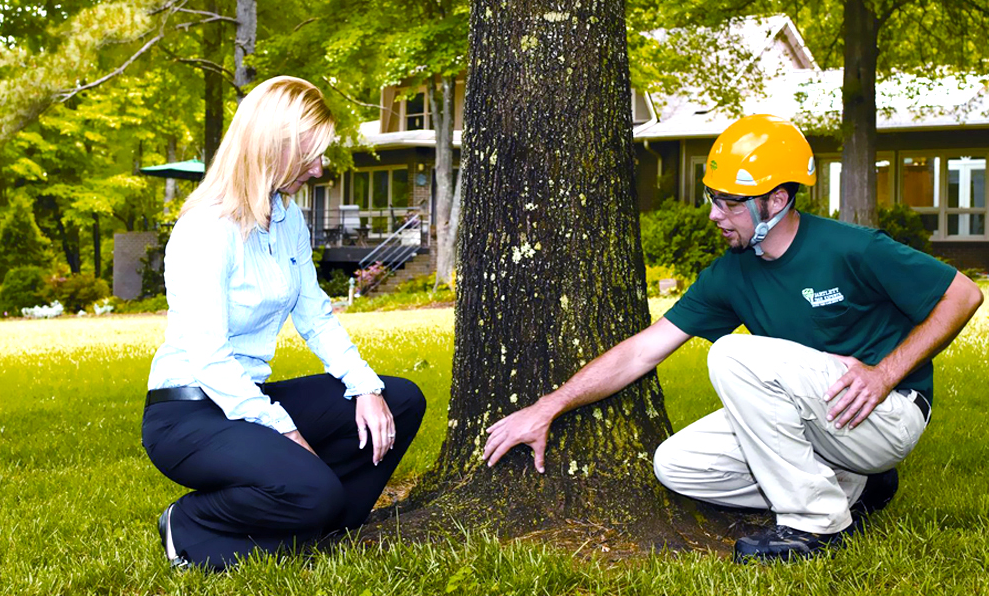 Tree Service - Anderson's Tree Care Specialists, Inc.