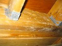 Wood Beams in Basement
