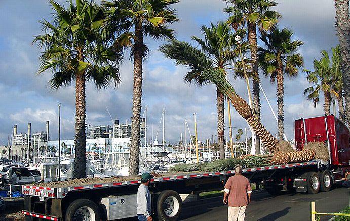 Tree Transportation - American Gardens Inc.