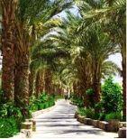 Landscape Design 1 - Omega Landscape Design