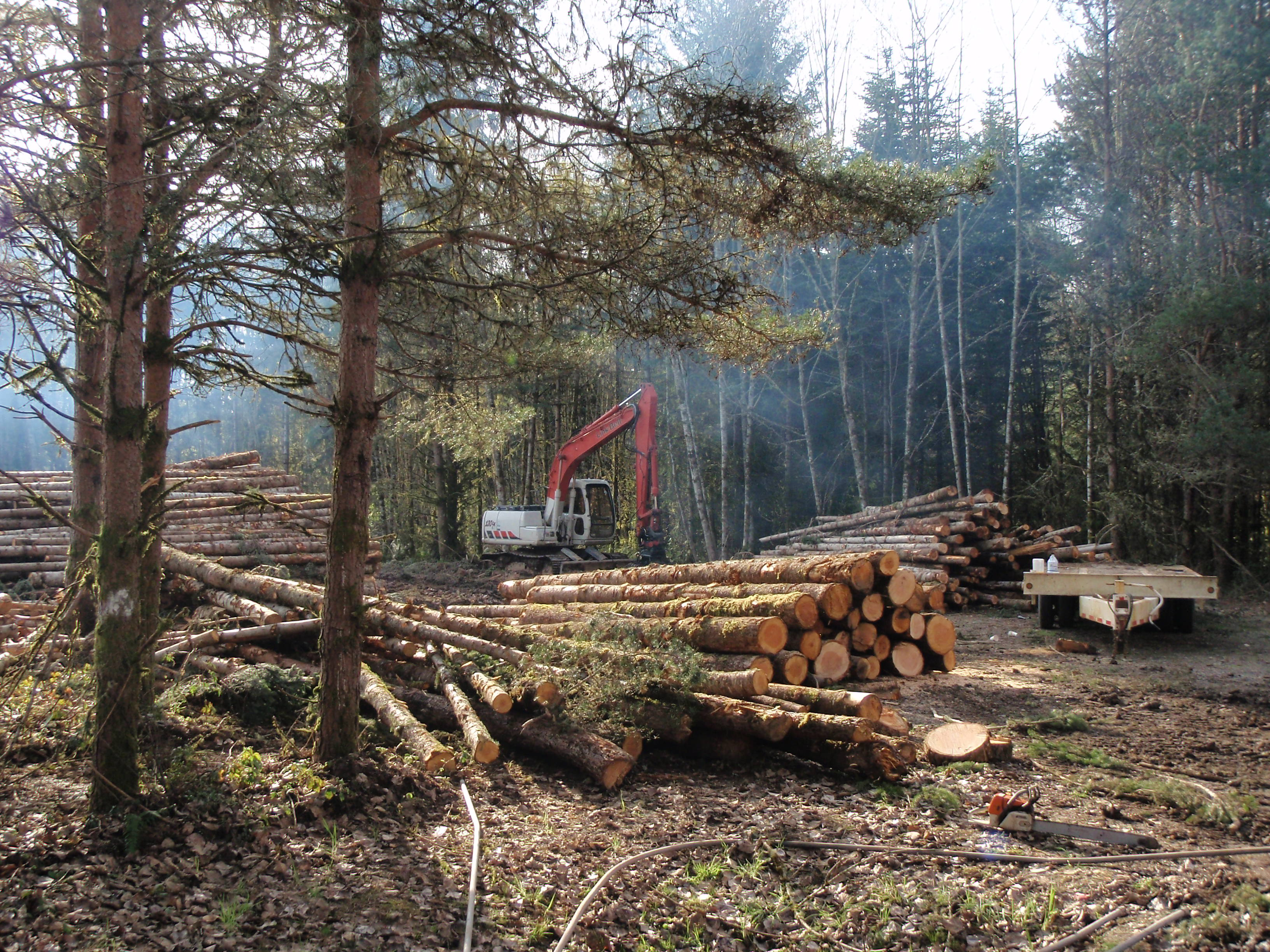 Small Residential Logging Job